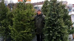 Nea Sipola ja joulukuusia