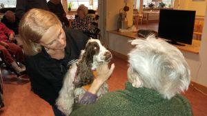 Kompishunden Ayda hälsar på de äldre i Tunahemmet i Snappertuna.