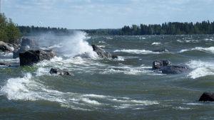 Vågor slår mot strandstenar i hård vind.