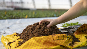 Kasvuturvetta Kukkamaa & pajupajan kasvihuoneella.