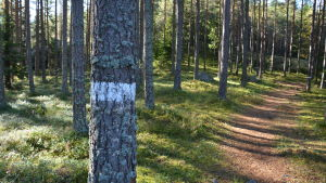 Skogsstig i Kimito