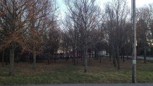 Ekdungen i närheten av Kyrkfjärdens skola i Ingå.