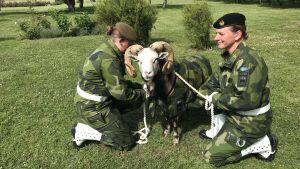 Två militärklädda kvinnor håller fast ett Gotlandsfår, som också har militära kläder.