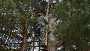Kamouflageklädd man klättrar upp i ett träd med hjälp av en ställning.