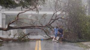 Två män går framför ett fallet träd längs en gata i Miami.