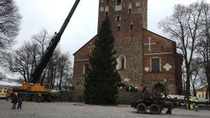 Julgran utanför Åbo domkyrka.