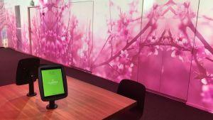 Rosa körsbärsblommor projiceras på väggarna i ett forskningsutrymme.