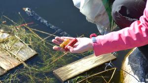 hand håller avfall i vattenbryn