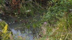 En ingräsad, igenväxt del av ett vattendrag. Ingå å.