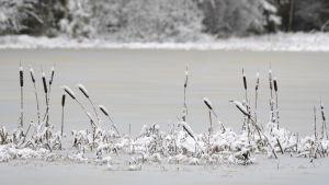 Kaveldun på en isig sjö i ett vintrigt landskap.
