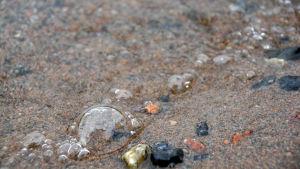 En liten våg som kommer in i stranden.