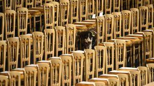 En vakthund fotograferad bland stolar i parlamentsbyggnaden i London.
