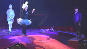 Sirkus Finlandias cirksusdirektör Carl Jernström jr ser på showen på scenen.