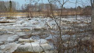 Isflack i översvämningsdrabbat vattendrag.