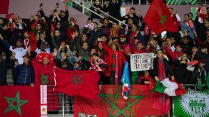 Marockanska fotbollssupportrar.