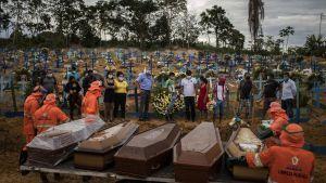 Flera kistor på rad på en begravningsplats i Manaus i Brasilien. Bredvid kistorna står skyddsklädda människor