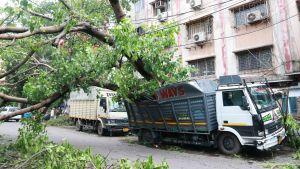 En lastbil i Calcutta ligger under ett träd som har fallit i stormen Amphang.