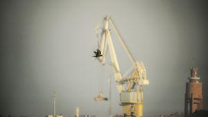 Korp flyger i Hangö.