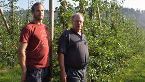 Gustaf och Ernst Knape står vid några äppelträd i Brödtorp.