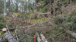 Avverkade träd vid elledning på Notholmen, Skåldö i Ekenäs skärgård.