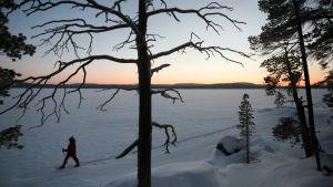 Lumikenkäilijä talvella järven jäällä Lapissa.