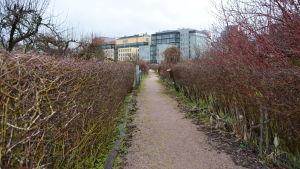 Stig mellan stugorna vid Brunakärr koloniträdgård.