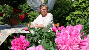 """Margareta """"Teta"""" Reinlund sitter i trädgårdens pergola och njuter av blommande pion"""