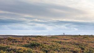 Öppet hedlanskap med hav i horisonten på Jurmo.