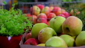 Omenoita korissa.