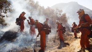 Brandmän gräver i mark i en rykande sluttning.