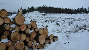 omkullfallna träd på ett kalhygge
