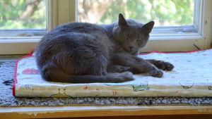Katt ligger på fönsterbrädet.