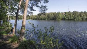 En sjö, det är en vacker sommardag, vattnet är blått. På stranden syns träd som lutar sig över vattnet