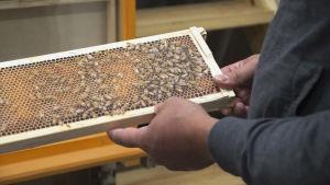 exempel på hur det kan se ut i en bikupa.