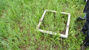 En bild på en kvadratisk metallkonstruktion som ligger mitt i en åker - inne i kvadraten växer det havre och också runtomkring. I rutan forskar man.