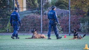 Poliser med polishundar på sportplan