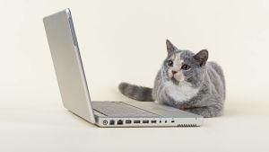 katt vid dator