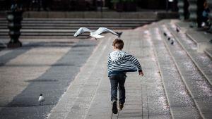 Pojke springer efter mås vid fontänen i Kungsträdgården som annars är tom på folk.