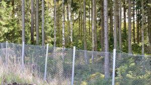 Skog bakom stängsel