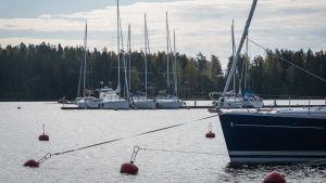 I bakgrunden skymtar en brygga med flera förtöjda båtar, i förgrunden bojar som guppar i vattnet och en förtöjd segelbåt