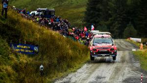 Esapekka Lappi I Wales rally 2019.