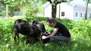 En kvinna i en hage med två får.