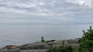 På bilden syns öppet hav, fotograferat från Mjölös södra sida. I förgrunden en tall och klippor, efter det bara öppet vatten. Det är mulet.