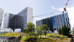 Bild på Mejlans tornsjukhus på sommaren.