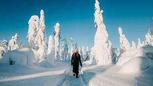 Nainen kävelee tykkylumisten puiden keskellä.