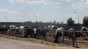 Kazakstan är ett viktigt jordbruksland