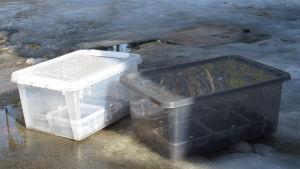 Två platslådor med lock som står ute i snöslask. Inuti lådorna finns odlingslådor med olika förodlingar.