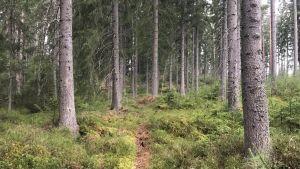 En skogsstig.