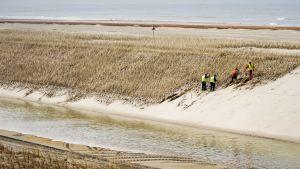 Utökad strandvall i Camperduin, Holland. 35 miljoner kubikmeter sand lades ut i mars för att förstärka kustlinjen i landet som är känsligt för översvämningar.