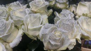 Vita rosor, försedda med glitter.